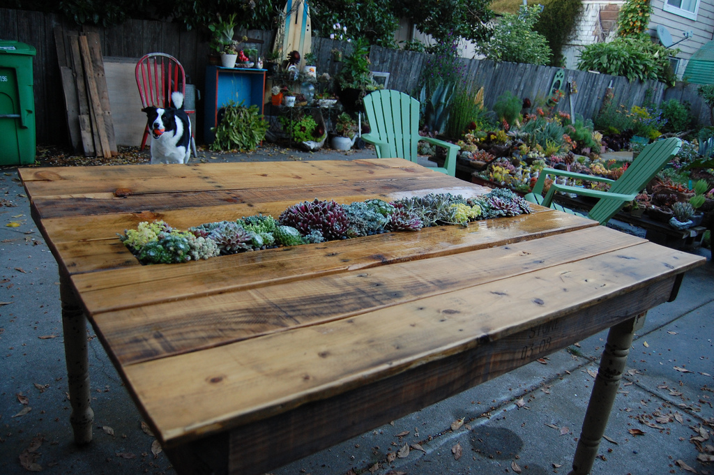 homemade succulent pallet table