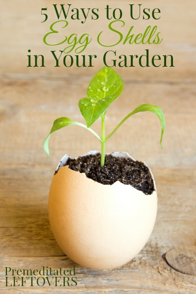 5 Different Uses For Egg Shells In The Garden