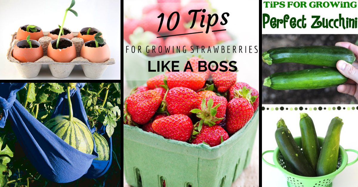 50 garden tips and hacks to turn you into a gardening expert cute diy projects - Garden Hacks