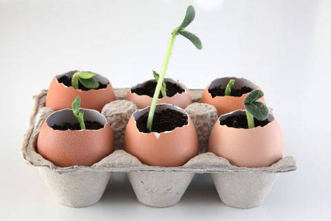Awesome Eggshell Seedling Pots Idea