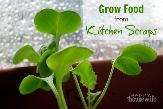 How To Grow Organic Food From Kitchen Scraps