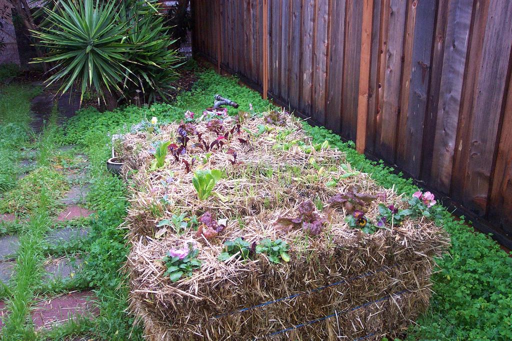 Make Your Own Straw Bale Garden