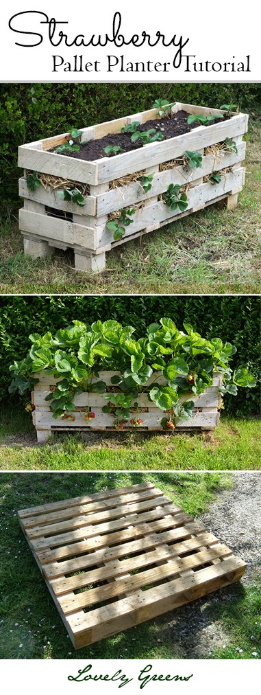 Strawberry Support System Made Entirely From Pallets
