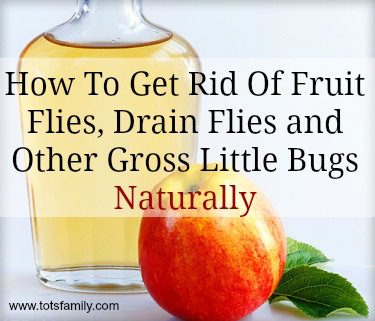 healthy fruit candy getting rid of fruit flies