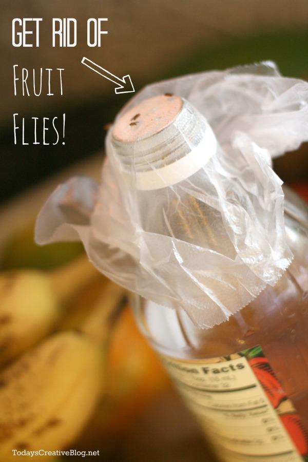 www how to get rid of fruit flies