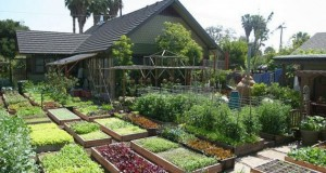 How To Produce Over 6000 Lbs of Food on a 1/10th Acre Farm