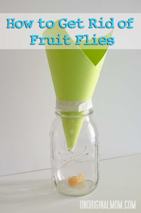 best way to get rid of fruit flies longan fruit