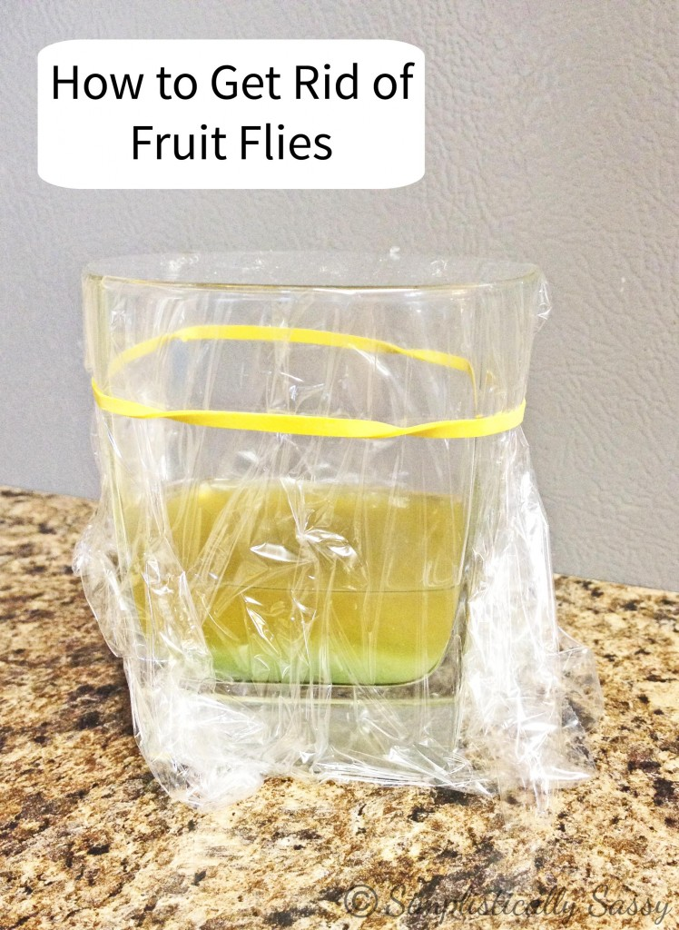How to Get Rid of Fruit Flies – Cute DIY Projects