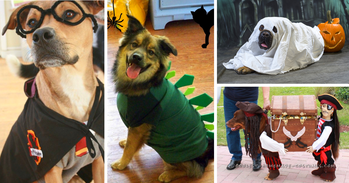 20 Adorable Diy Pet Costume Ideas For Halloween 2017
