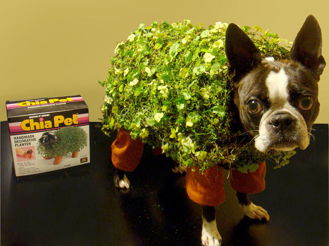 20 adorable diy pet costume ideas for halloween 2017 chia pet dog costume solutioingenieria Choice Image