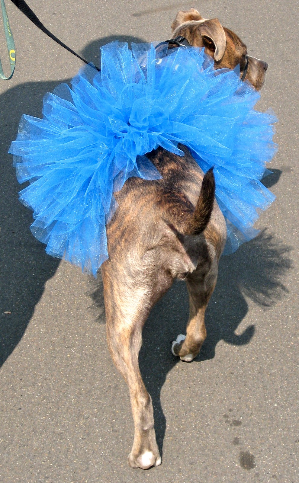 20 adorable diy pet costume ideas for halloween 2017 diy dog tutu tutorial halloween solutioingenieria Choice Image