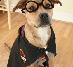 Harry Potter Dog Halloween Costumes.Harry Potter Dog Costume Cute Diy Projects