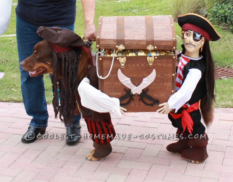 Homemade Dog Pirate Costume