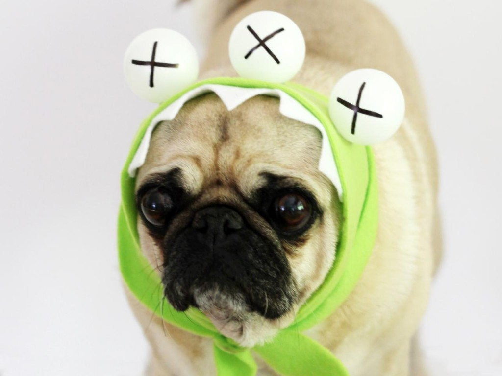 How to Make a No-Sew Monster Halloween Dog Costume