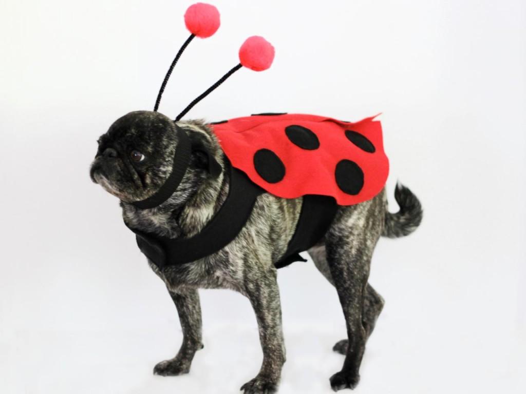 Ladybug Halloween Dog Costume