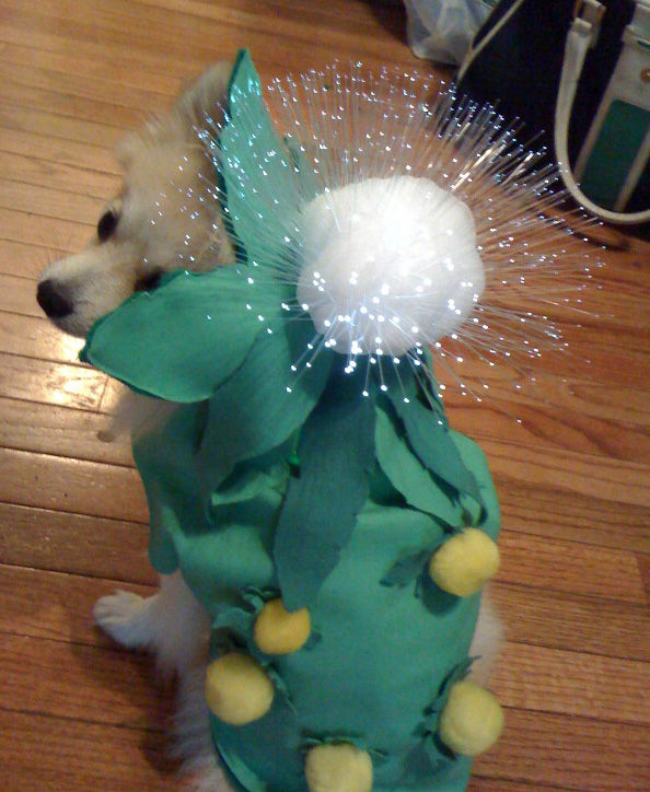 20 adorable diy pet costume ideas for halloween 2017 light up dandelion doggy costume your dog will solutioingenieria Choice Image