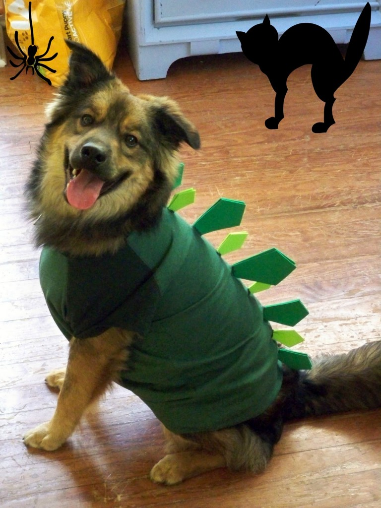 20 adorable diy pet costume ideas for halloween 2017 simple dog halloween costume solutioingenieria Image collections
