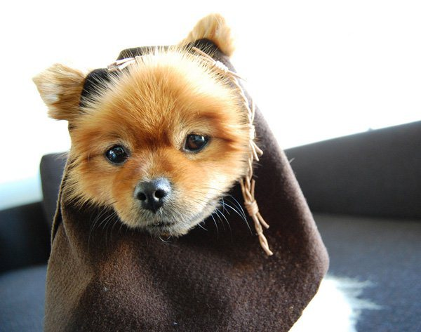 20 adorable diy pet costume ideas for halloween 2017 star wars halloween costumes for dogs solutioingenieria Choice Image