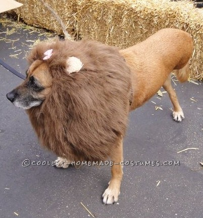 The Very Best 3-Legged Lioness – Pet Dog Costume