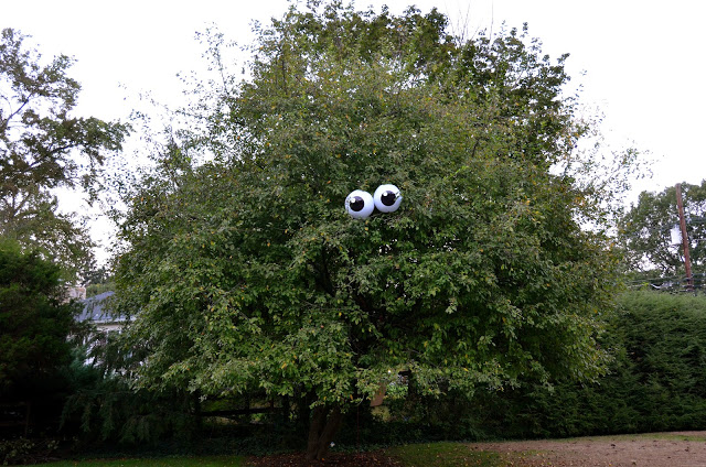 Eyeballs in a Tree