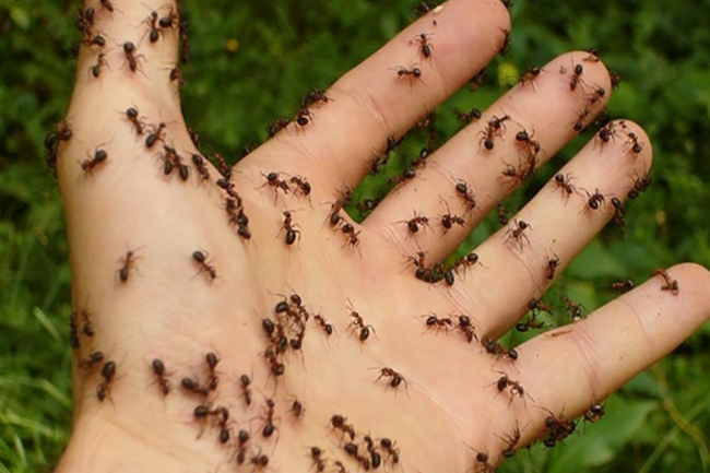 DIY ANT SPRAYHow To Get Rid of Ants Naturally