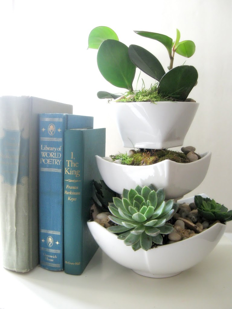 Terrariums for Succulents