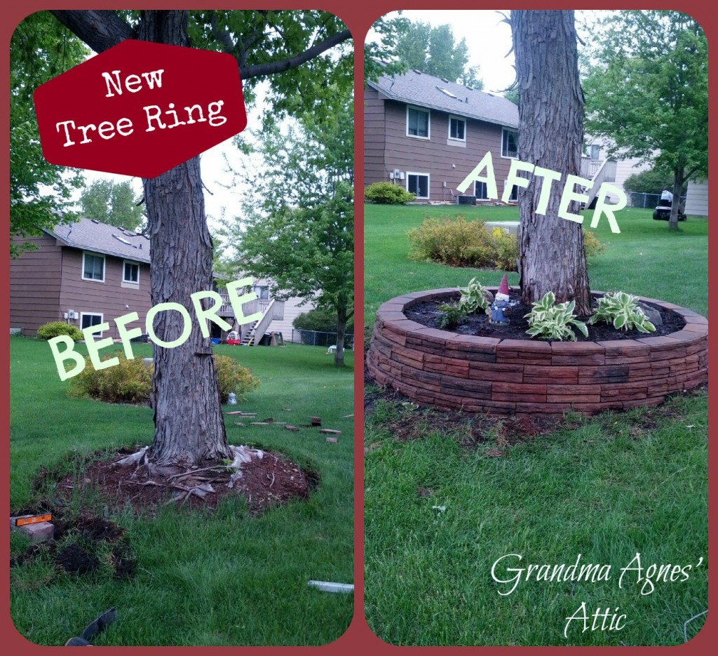 Front Maple Tree Landscaping Make-over