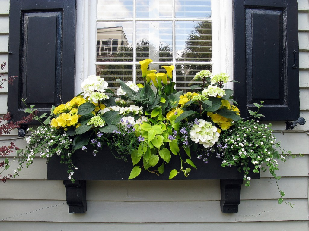 Black window box with Black Shutters