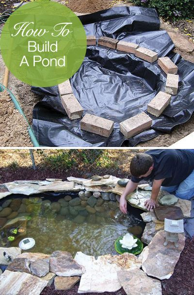 How to Build an Easy and Cheap Pond