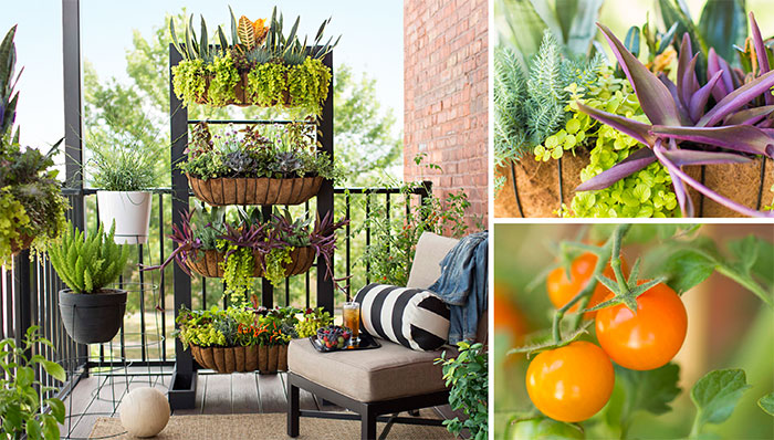 25 gorgeous vertical garden ideas that are a boon for for Small balcony garden ideas