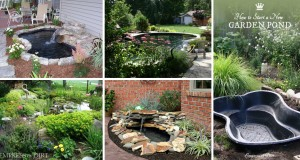best DIY Pond Ideas