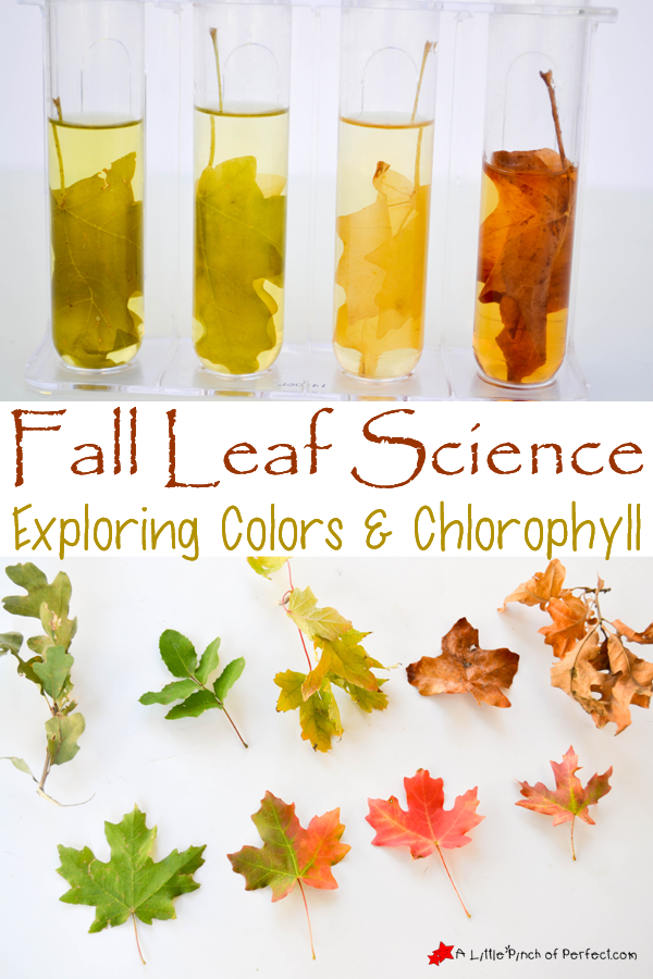Easy Fallen Leaf Science Experiment