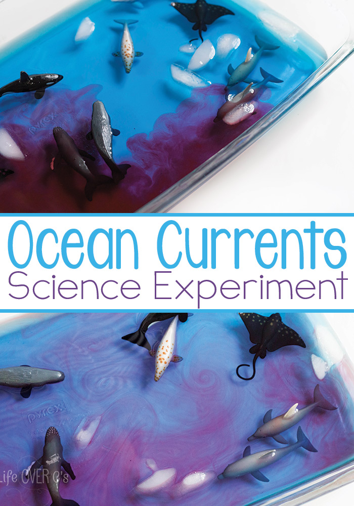 Ocean Currents Science Experiment