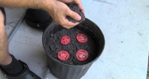 The Easiest Way To Grow Tomato Seedlings