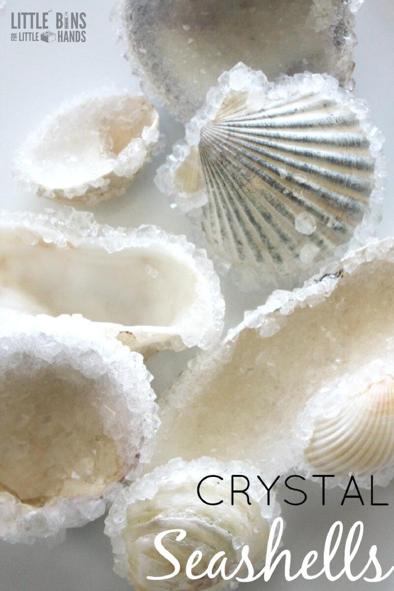 Crystal Seashells Borax Crystal Growing Science Experiment